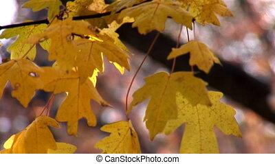 autumn 26
