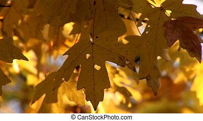 autumn 27