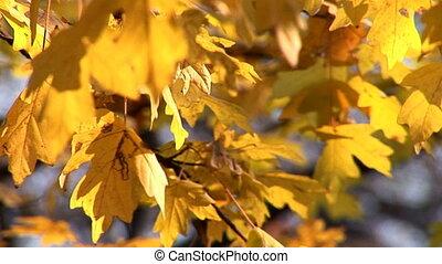 autumn 23