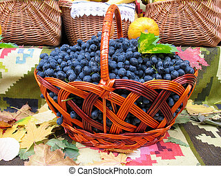 Grapes in the basket. Grapevine over carpet and leaves