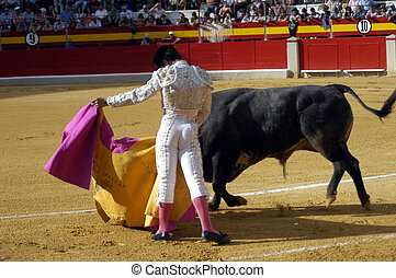 typical bullfight in Spain
