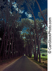 Tranquil Road - Tranquil Tar Road Through Canopy of Natural...