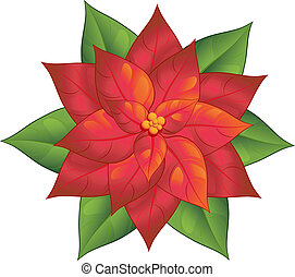 Poinsettia - Red poinsettia isolated over white. EPS 8, AI,...