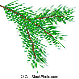 Fir tree branch - Vector fir tree branch isolated on a white...