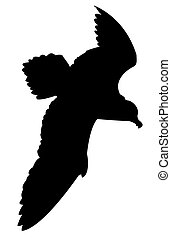 silhouette of the sea gull on whit