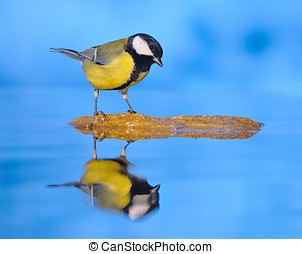 In the Blue Lagoon. - Great tit reflected in the water with...