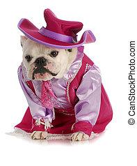 dog dressed up as cowgirl - dog cowgirl - english bulldog...
