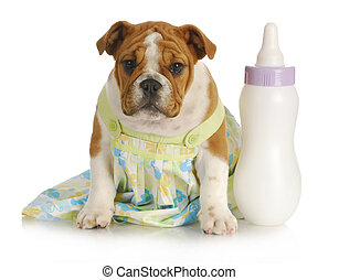 bottle feeding young puppy - bottle feeding puppy - english...