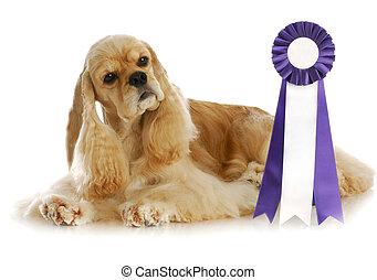 campeón, perro