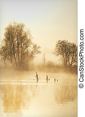 misty atmosphere - a pond in a misty atmosphere