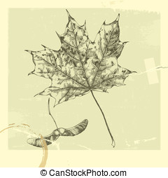 Maple leaf. - Hand-drawn leaves. Autumn leaves. Set of...