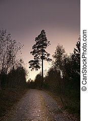 Pine tree on purple sky - Pine tree and road in purple...