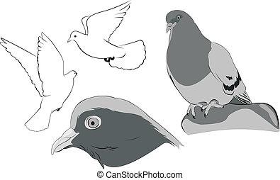 white doves sketches