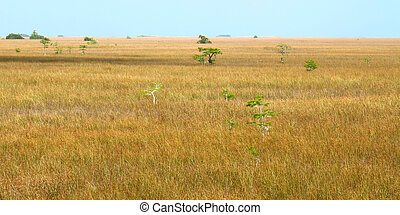 Mangroves in the Everglades - Vast expanse of the Everglades...
