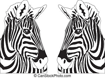 Zebra Reflections - Two identical zebras design