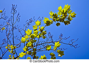 leaves of a tree in intensive light - leaves of a tree in...