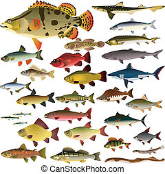 Vector collection of fish on a white background