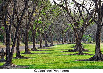 wayside trees - Beautiful autumn wayside trees