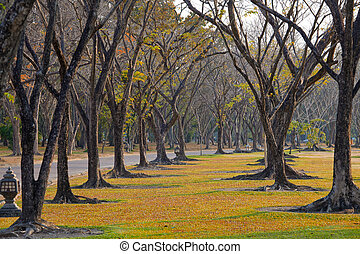 wayside trees - Beautiful autumn wayside trees