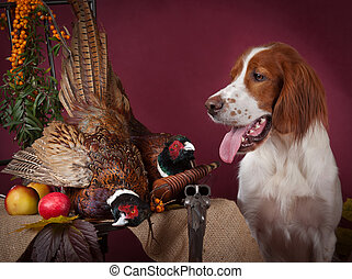 Successful bird shoot, studio, clous-up - Working dog...