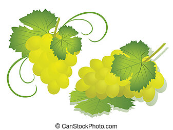 Grape isolated on white - vector illustration