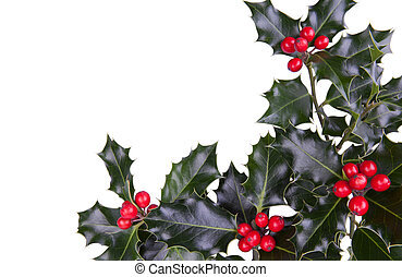 Christmas holly - Christmas holly with red berries in the...