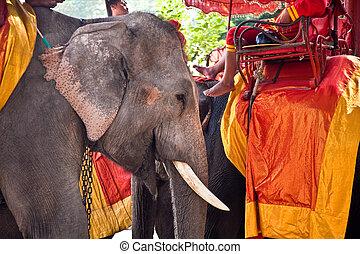 elephant for tourist ride