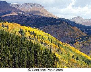 Fire on the Mountain - Changing Aspen at high elevation...