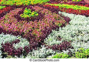 flowerbed - beautiful flowerbed...