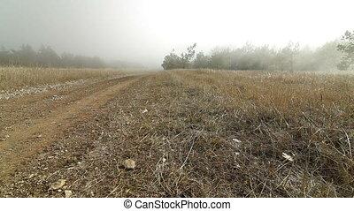 foggy road in the mountains. Ai-Petri, Crimea, Ukraine