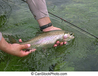 Rainbow release - Angler releases rainbow trout