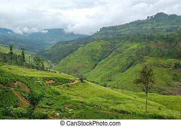 The landscape of Nuwara Eliya, Sri Lanka