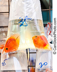 Bags of fishes for sale at a market - Bags of fishes for...