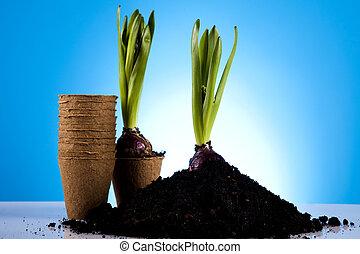植物, 花園