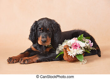 setter's puppy with flowers