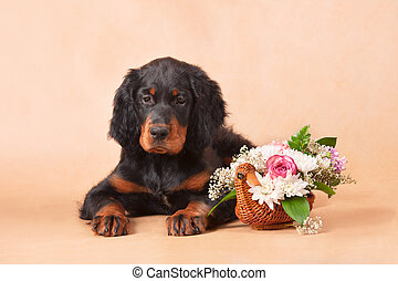 setters puppy with flowers - gordon setters puppy with...