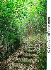 Green Bamboo Forest -- a path leads through a lush bamboo...