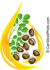 Moringa oleifera oil. Stylized drop. Vector illustration on...