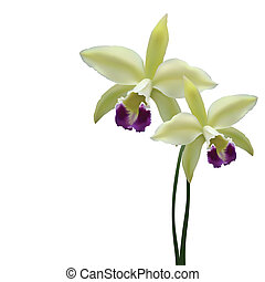 Vector orchid flower - Photorealistic illustration - a...