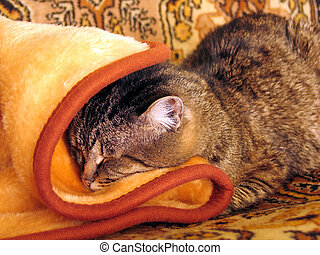 home and dry cat - Cat sleeping on a sofa in cold and winter...
