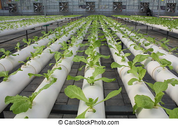 New technology cultivation - In the light of the indoor...