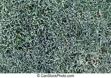 Less Lawn Care - Frost covered grass on a chilly autumn...