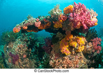 Rainbow coral - The view of colourful soft coral in a...