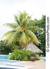 Swimming pool next to a huge palm tree