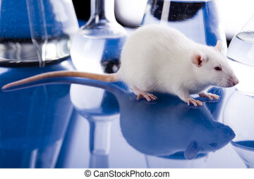 Animal in laboratory - A laboratory is a place where...