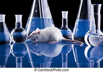 フラスコ, ネズミ