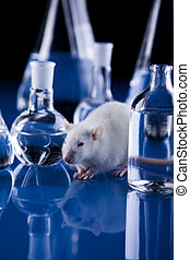 Rat&lab - A laboratory is a place where scientific research...