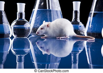 Rat and lab - A laboratory is a place where scientific...