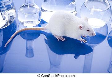 実験室, 動物