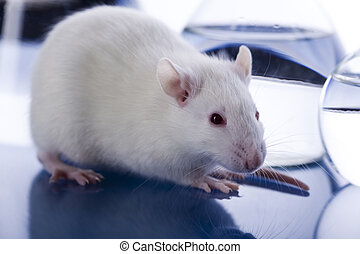 Rat in laboratory - A laboratory is a place where scientific...
